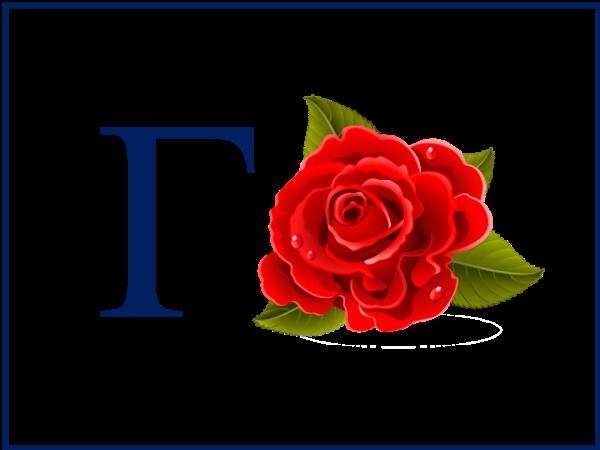 роза-гроза