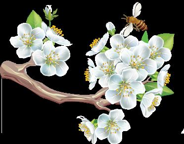 цветущая ветка, пчелка