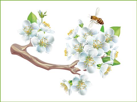 цветйщий май, подарок 6