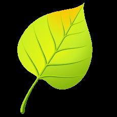 лист березы 1