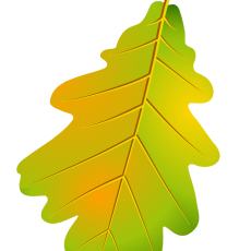 лист дуба 1