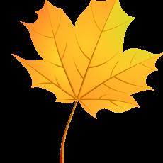 лист клёна 1