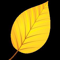 лист ольхи