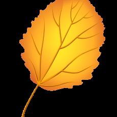 листья осины 1
