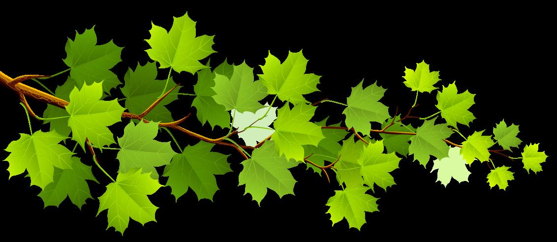 ветка-с-кленовыми-зелеными-листьями-1