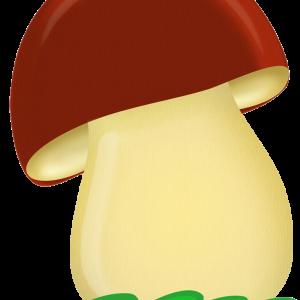 бол гриб