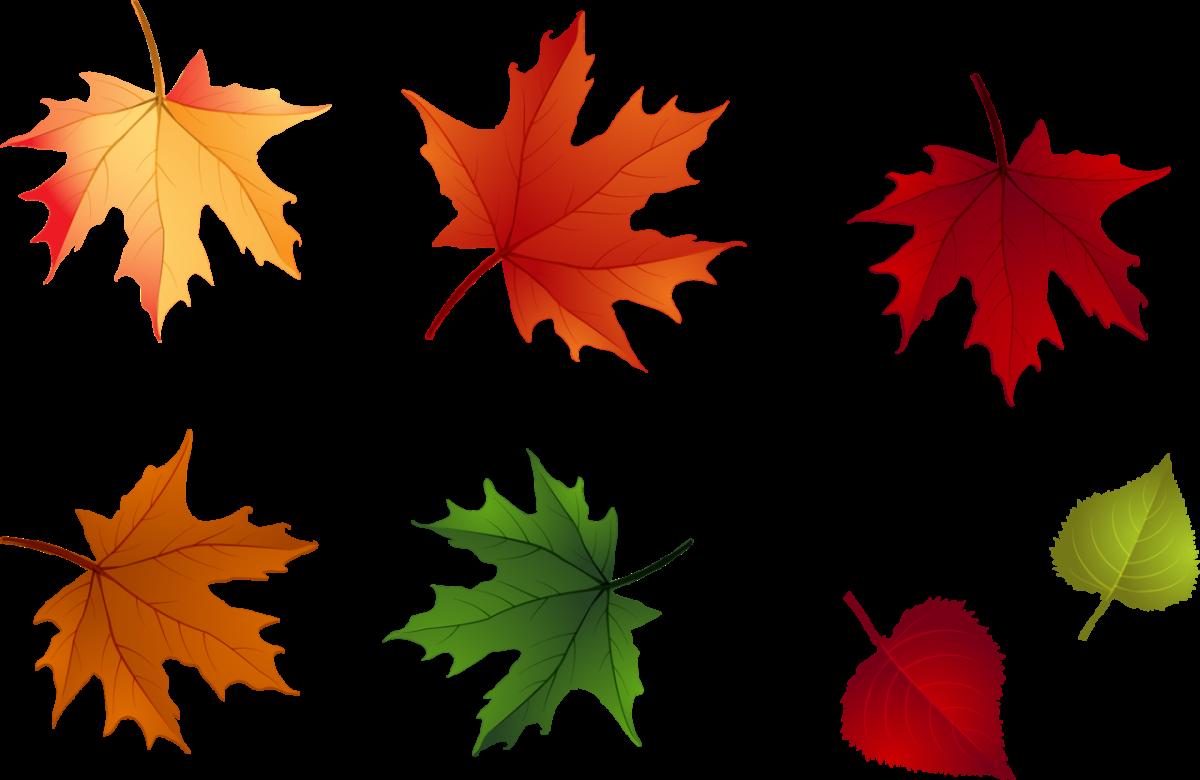 Осенние листья картинки цветные шаблоны для вырезания - b304