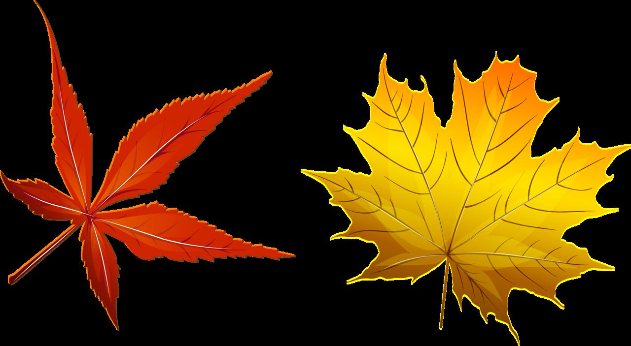 осенние листья 2