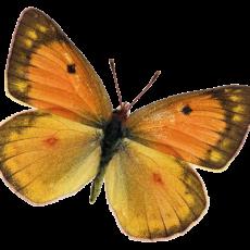 бабочка1