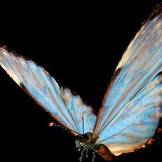 бабочка12