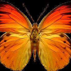 бабочка13