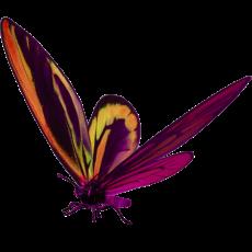 бабочка17
