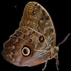 бабочка20