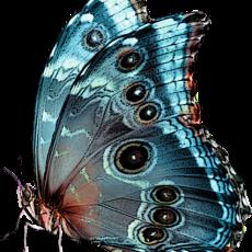 бабочка21