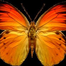 бабочка22