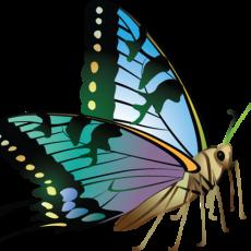 бабочка23