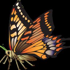 бабочка24