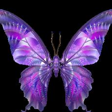 бабочка6
