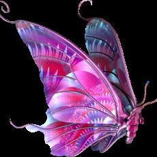 бабочка7