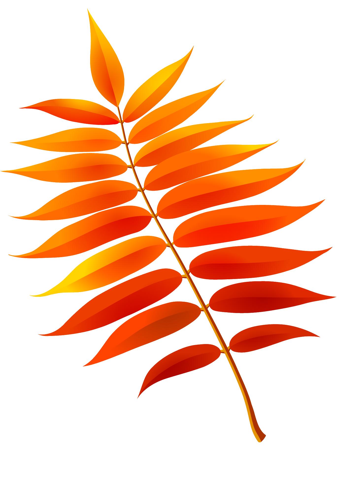долгое листья рябины в картинках белоруссии